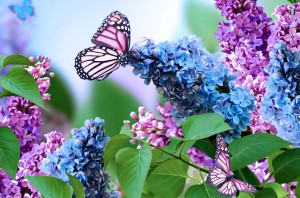 Characteristic features and lilac, photo