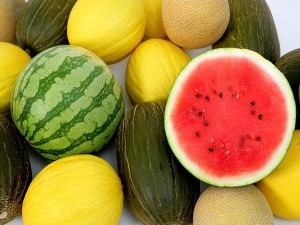 Care and fertilizer melons and watermelons, photo