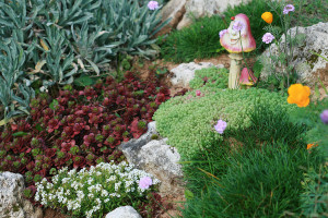 Types (varieties) family stonecrop sedum, description and a photo