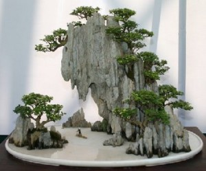 Humidity level when the content of bonsai, the description and photo