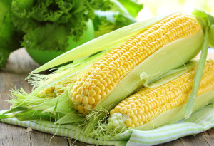 Preparation and processing of soil for sowing maize, description and a photo