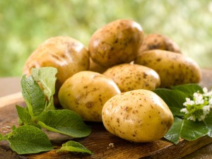 Tips on caring potatoes in the open field, watering, fertilizing, description and a photo