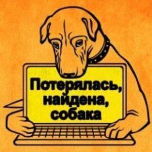 чтобы не потерялась собака
